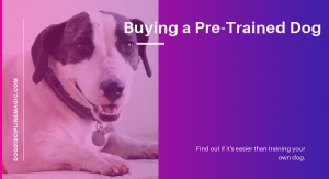 buying a pre-trained dog