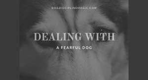 dealing with a fearful dog