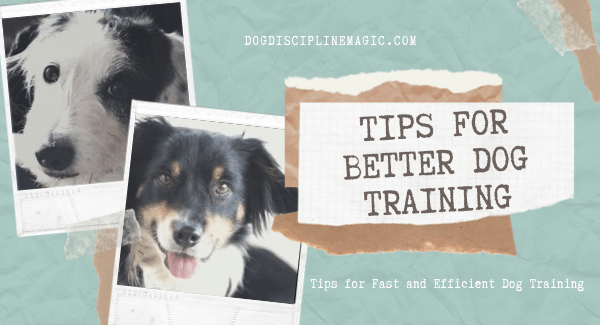 tips for better dog training