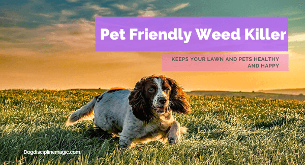 Best Pet Friendly Weed Killer