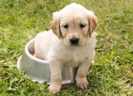 puppy-1207816_640.jpg